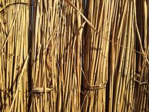 Texture of cane dry close up Stock Photography