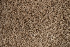 Texture of carpet Stock Images