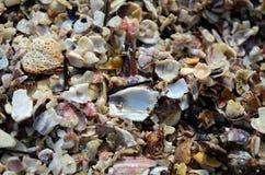 Texture cassée de coquilles de mer pour le fond et/ou le modèle photo stock