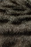 Texture of cat`s fur royalty free stock image