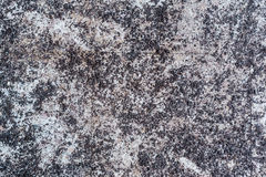Texture of cement. Rntexture of floorrntexture of wall Stock Photography