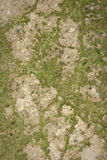 Texture of cement flooring Royalty Free Stock Photos