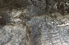 The texture of the burnt tree, there is a place to fill stock image