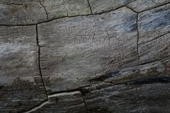 The texture of the charred planks of the walls of the house royalty free stock images