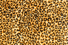Texture of close up print fabric striped leopard Stock Photos