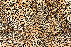 Texture of close up print fabric striped leopard Stock Images