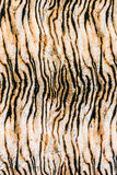 Texture of close up print fabric striped tiger royalty free stock photo