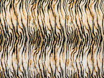 Texture of close up print fabric striped tiger Stock Photos