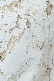 Texture Close Up statue of Chipped White peeling paint, covered Royalty Free Stock Photography