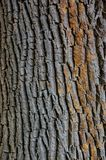 Texture closeup shot of brown tree bark Stock Photography
