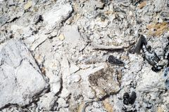 Texture of coal ash. Background of coal ash close up after the fire texture royalty free stock images