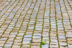 Texture of cobbles with grass Stock Images