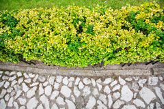 Texture of cobblestones and green bushes and grass Stock Photos