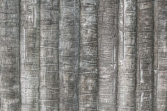 Texture of coconut or palm tree bark for background Royalty Free Stock Image