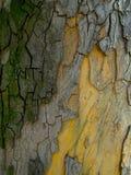 Texture colorée d'écorce Photographie stock