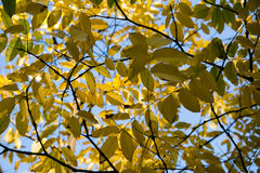 Texture colorée de feuilles en automne Photographie stock