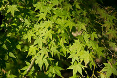 Texture colorée de feuilles en automne Photographie stock libre de droits