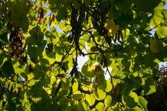 Texture colorée de feuilles en automne Photos stock