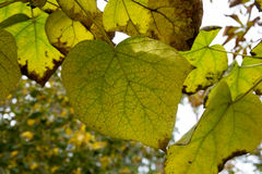 Texture colorée de feuilles en automne Image stock