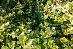 Texture colorée de feuilles en automne Photos libres de droits
