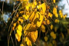 Texture colorée de feuilles en automne Photo stock