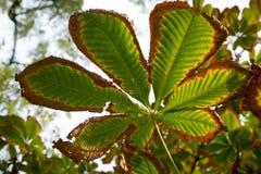 Texture colorée de feuilles en automne Photo libre de droits