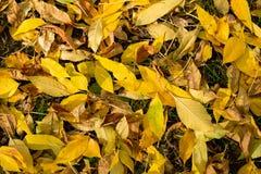 Texture colorée de feuilles en automne Images stock