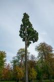 Texture colorée de feuilles en automne Images libres de droits