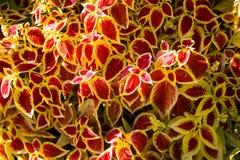 Texture colorée de fleurs Image libre de droits