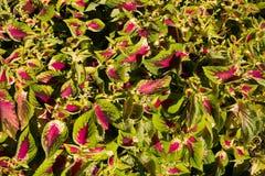 Texture colorée de fleurs Images stock