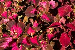 Texture colorée de fleurs Photo libre de droits