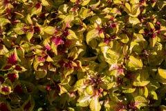 Texture colorée de fleurs Photographie stock libre de droits