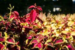 Texture colorée de fleurs Photos libres de droits