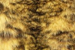 Texture colorée de fourrure de léopard de neige Photographie stock