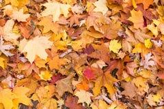 Texture colorée de lame d'automne Images stock