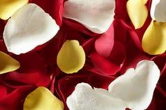 Texture colorée de papier peint de configuration de pétale rose Photos libres de droits
