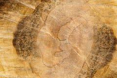 Texture colorée de plan rapproché coupé d'arbre Photos libres de droits