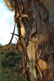 Texture colorée de tronc d'arbre image libre de droits