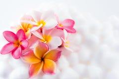 Texture color?e de papier peint de fleur de Plumeria images stock
