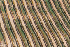 Vineyard in autumn 2. Texture of colored vineyard in autumn stock image