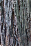 Texture colored wood for backgrounds. Love Stock Images