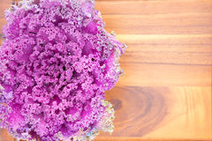 Texture of colourful curly-leaf purple kale Stock Photography