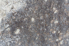 Texture of concrete Stock Image