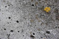 Texture concrete. Old concrete. Wet concrete, moss-grown Stock Image
