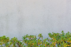 Texture concrete wall against green bush. Royalty Free Stock Photos