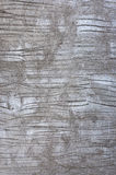 Texture of concrete wall Stock Photography