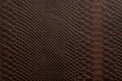 A texture consisting of brown cells, similar to the skin of a sn Stock Image