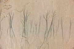 Texture constituée par érosion images stock