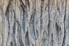 The texture of a convex fibrous carved textured gray wood with stripes and patterns with splinters and chips. The background royalty free stock images