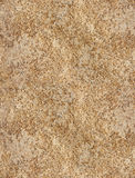 Texture of Coquina Stock Photos
